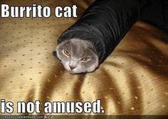 Burrito cat #1