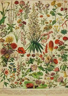 1900 Flores (por CastafioreOldPrints   Etsy) plant, floral patterns, botanical patterns, garden, print, flower