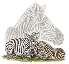 Mom And Baby Zebra Art Print By Kelli Swan art prints, babi zebra, zebra art