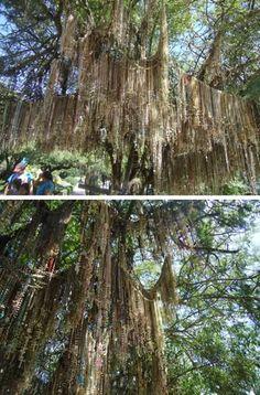 Arvores exóticas