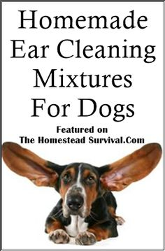Homemade Ear Wash For Dogs