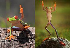 fuck you man, la plus rebelle des grenouilles #frog