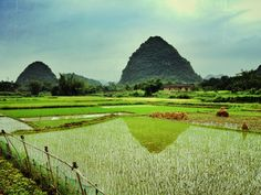 Yangshou paddy fields, China