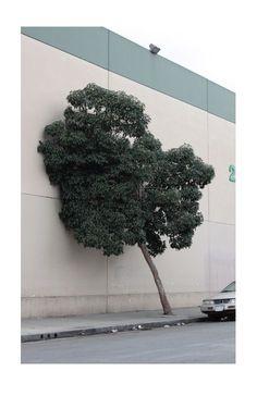 jamey hoag - a hugging tree