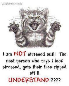 Very stressed cat