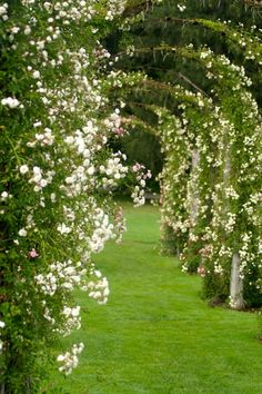 Rose arches on a green lawn.