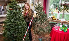 #homeandfamily Episodes - Shirley Bovshows Christmas Tree Buying Tips!