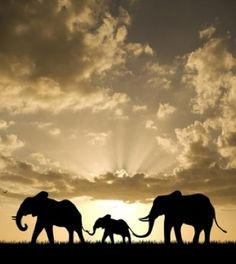 Elephant family--- cool picture.