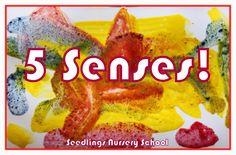 Seedlings Nursery School: 5 Senses!