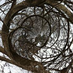 a tree....amazing
