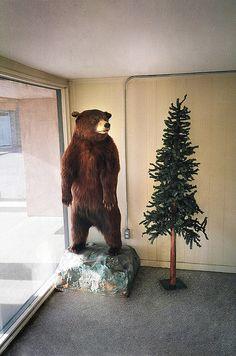 I want a bear.
