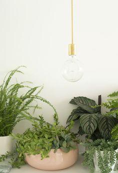 gold light + plants