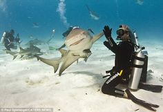 like a boss, high five, highfive, scuba diving, the bahamas, sharks, perfectly timed photos, bucket lists, animal