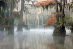 Caddo Lake - Texas State Park