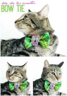 Halloween Bowtie for Cat or Dog - by Jennifer Priest of hydrangeahippo FINAL