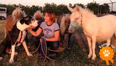 """Runner Up. Duke, adopted from Wayside Waifs – Kansas City, MO:""""Here is Duke hanging out with his backyard buddies."""""""