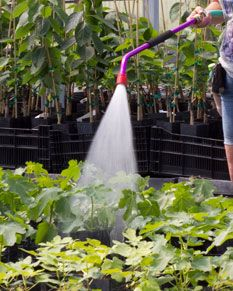 Fruit Tree Care: Spraying & Weed Control - Growing with Stark Bro's Good spraying schedule, includes when and what for.