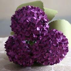 Purple Hydrengea
