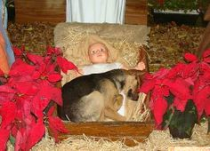 ... the other nativity dog story. :-) Nativity puppy - snopes.com
