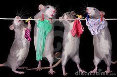 Mice, hanging laundry