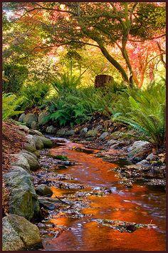 Fall stream in Beacon Hill Park, Victoria BC, Canada