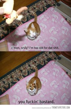 games, galleries, lightning, toy, silly cats, funny pictures, blog, kitty, cat memes
