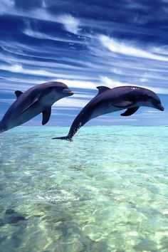 Dolphins:) so beautiful