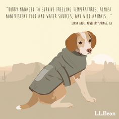 Your #LLBean stories -- illustrated.  Click photo to read more on our blog.
