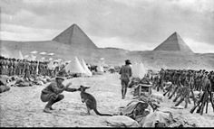 Australian troops at Mena Camp, Egypt, December 1914, looking towards the Pyramids. Many Australian units brought kangaroos and other Australian animals with them to Egypt, and some were given to the Cairo Zoological Gardens when the units went to Gallipoli.