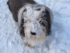 Stella Having Fun In The Snow - iWitness Weather Photos and Video Photo