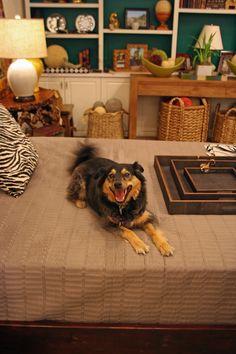 This friendly #pup loves #Mecox #decor ideas #trays #bedroom #Chicago #interiordesign #MecoxGardens #furniture #shopping #home #decor #design #room #designidea #vintage #antiques #garden