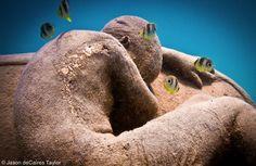 Anthropocene | Jason de Caires Taylor  Depth 8m, MUSA Collection, Cancun/Isla Mujeres, Mexico
