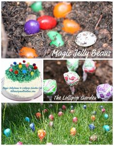 Still time to do this. Plant these Magic Jelly Beans and watch them grow into lollipops.  Such a special tradition idea behind this and a memory your kids will never forget.