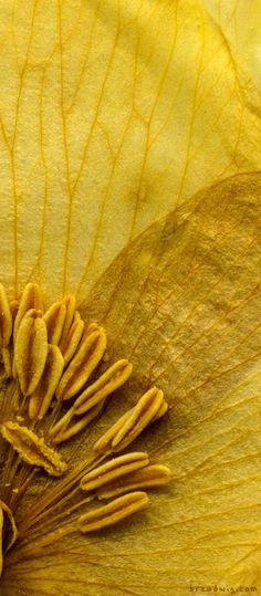 Macro of a yellow flower.