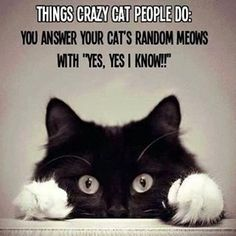 crazy cat people... The funny thing is I  do this - Always talking to my cat like he knows what I am saying LOL