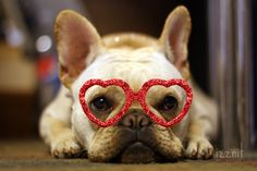 Happy Valentines Day from Frenchie