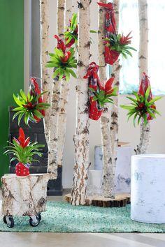 Bromeliad, natural beauty's www.bromelia.info