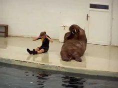 I didn't know walruses were cute!