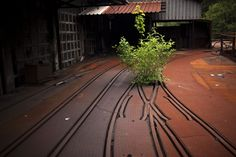 A bushel grows through the rails of the Figaredo mines, abandoned and closed more than five years ago because of the coal crisis in the Turon valley near Oviedo, Spain.