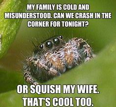The Sad World Of The Misunderstood House Spider