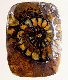 Ammonite in matrix, #fossil, #mineral
