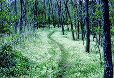 Appalachian Trail Shenandoah National Park Virginia
