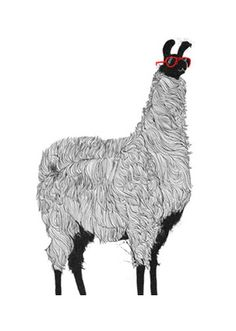 llama in sunnies