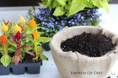 garden container, easi key, garden idea, gorgeous garden