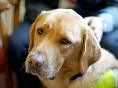 Service Dogs Who Save Lives