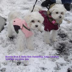 Snow Day at Mt. Charleston, Las Vegas! Keeping warm in their Puffer Jackets...the BB Girls!