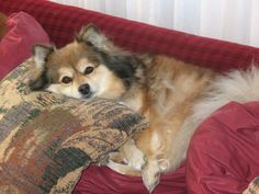 Roxy....Just Chill'in