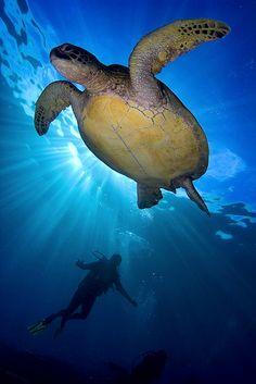 Turtlediver by Soren Egeberg on Flickr