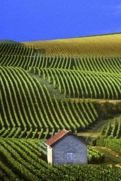 Champagne, France...  Made and found