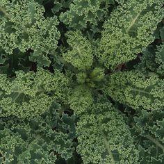 Kale: A Growing Guide: Organic Gardening